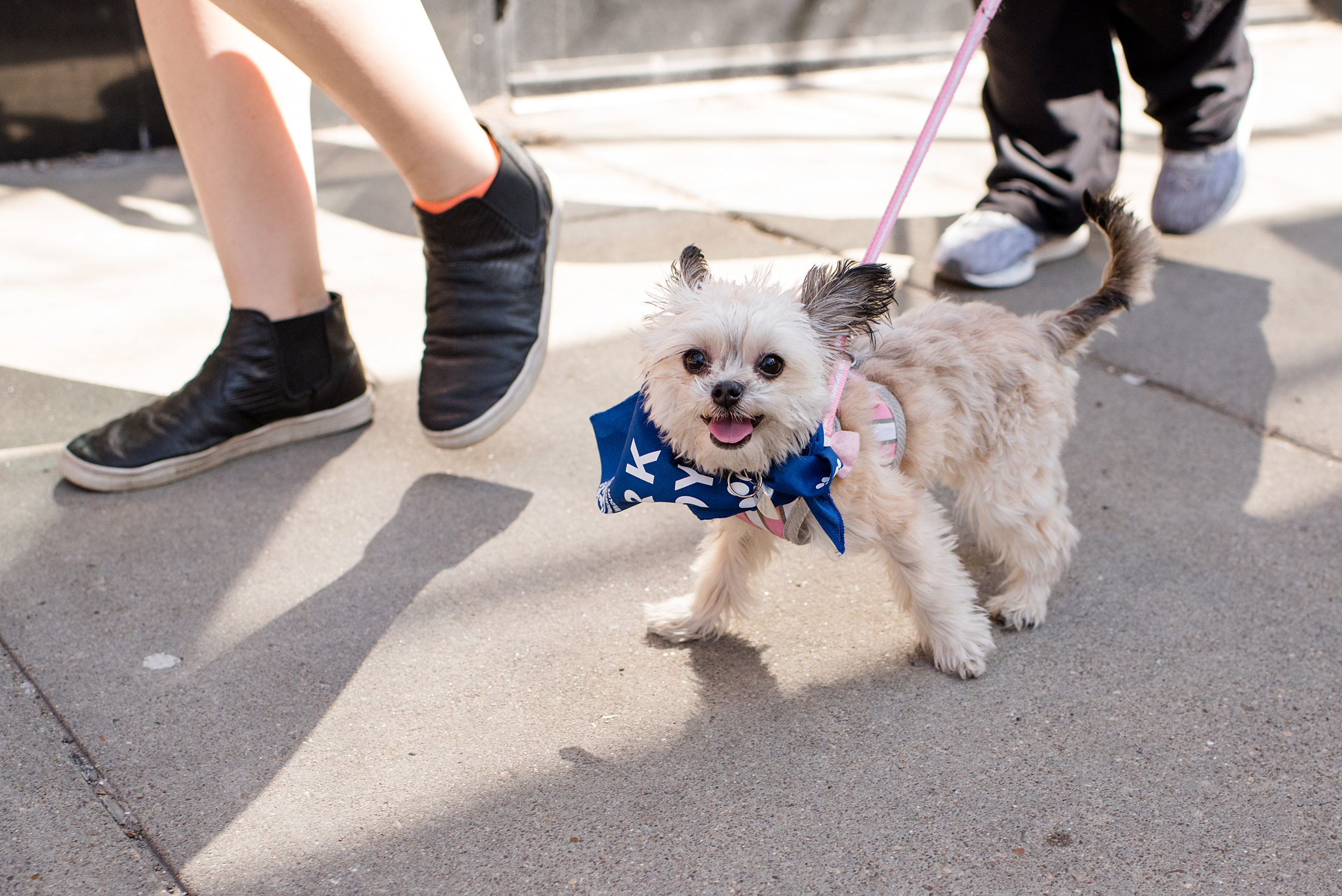 Bark Shadyside Pup Walk Pittsburgh 2016 121.jpg
