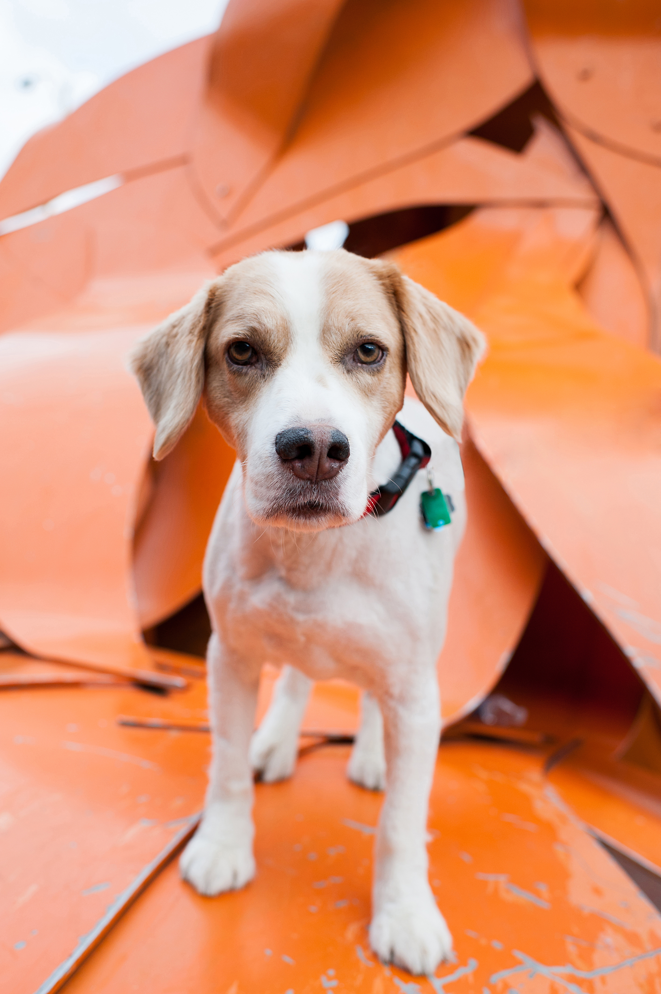 pittsburgh-north-shore-dog-photography-jenny-karlsson-001.jpg