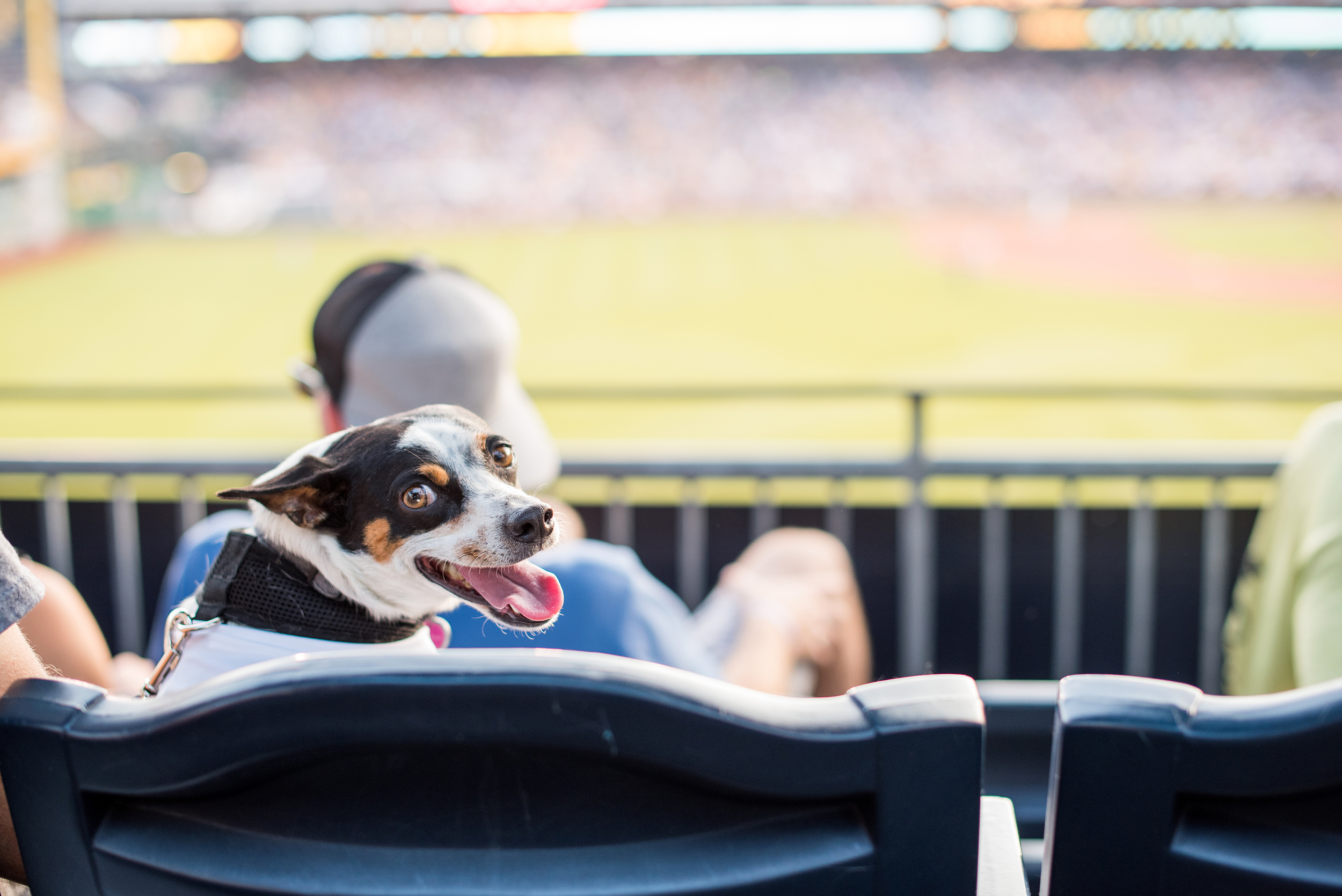 Pup Night at PNC Park-50.jpg