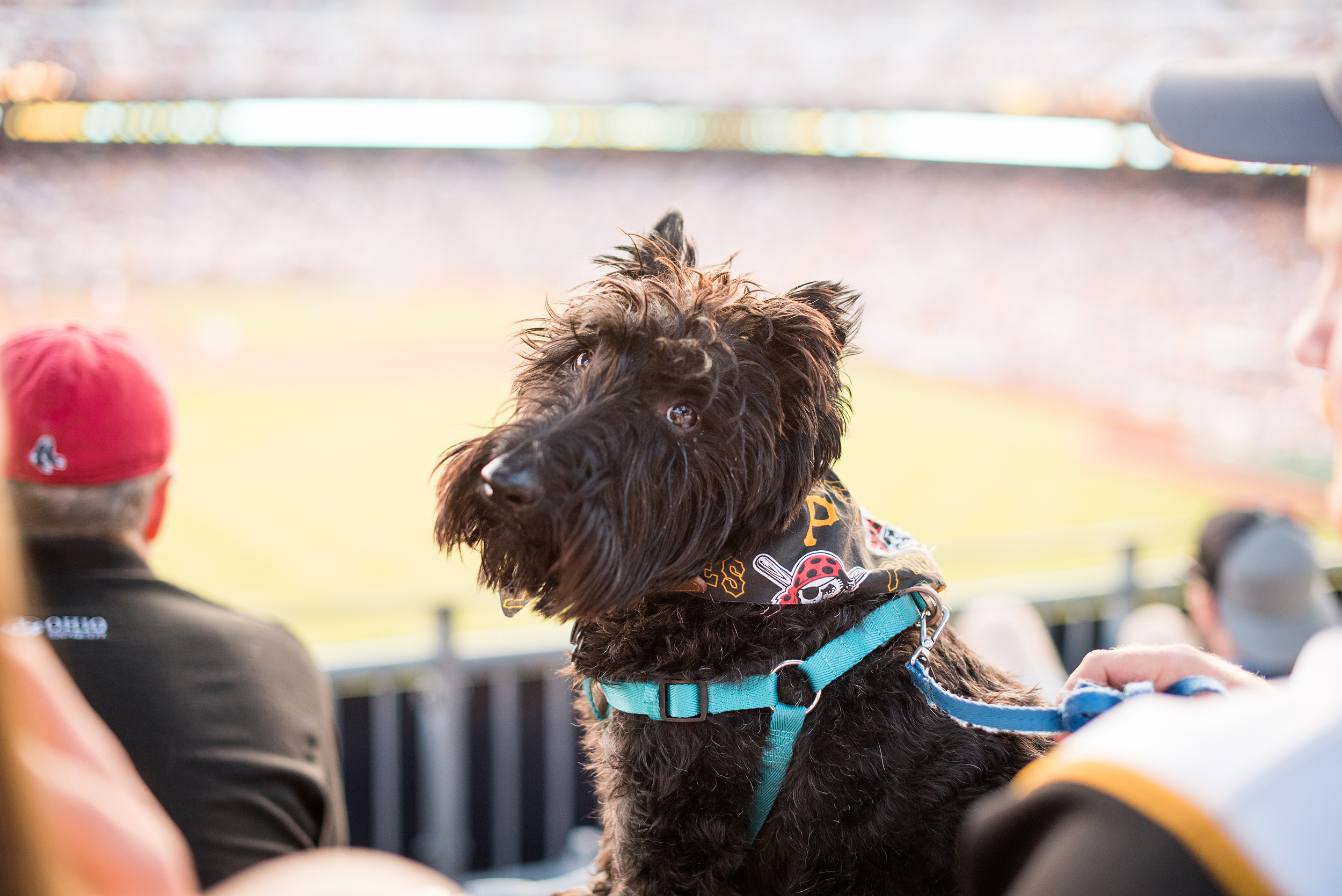 Pup Night at PNC Park-59.jpg
