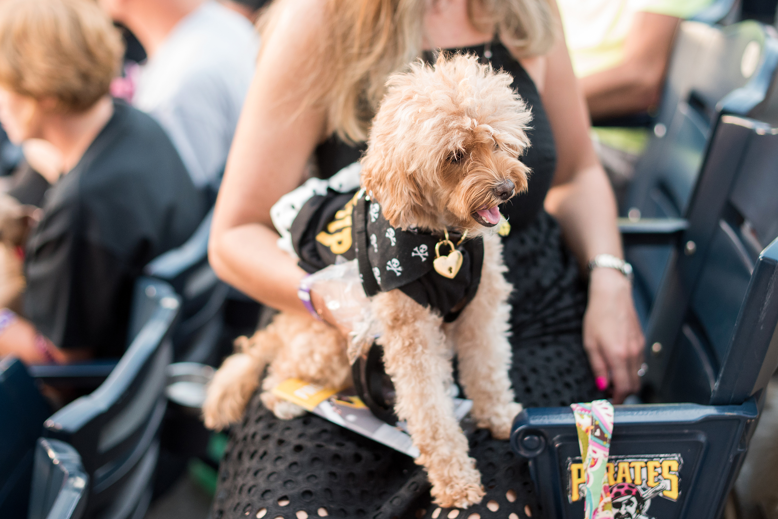 Pup Night at PNC Park-71.jpg