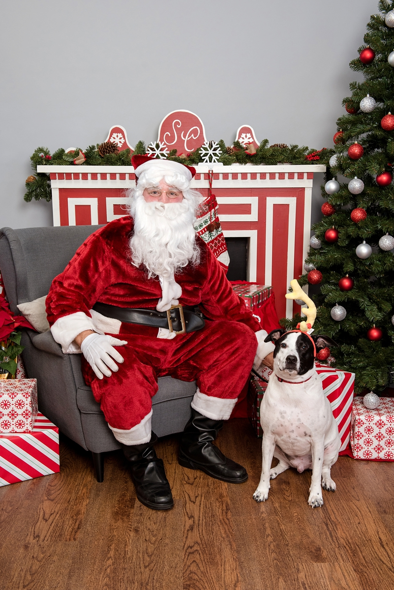 pet photos with Santa Petagogy Greensburg 004.jpg
