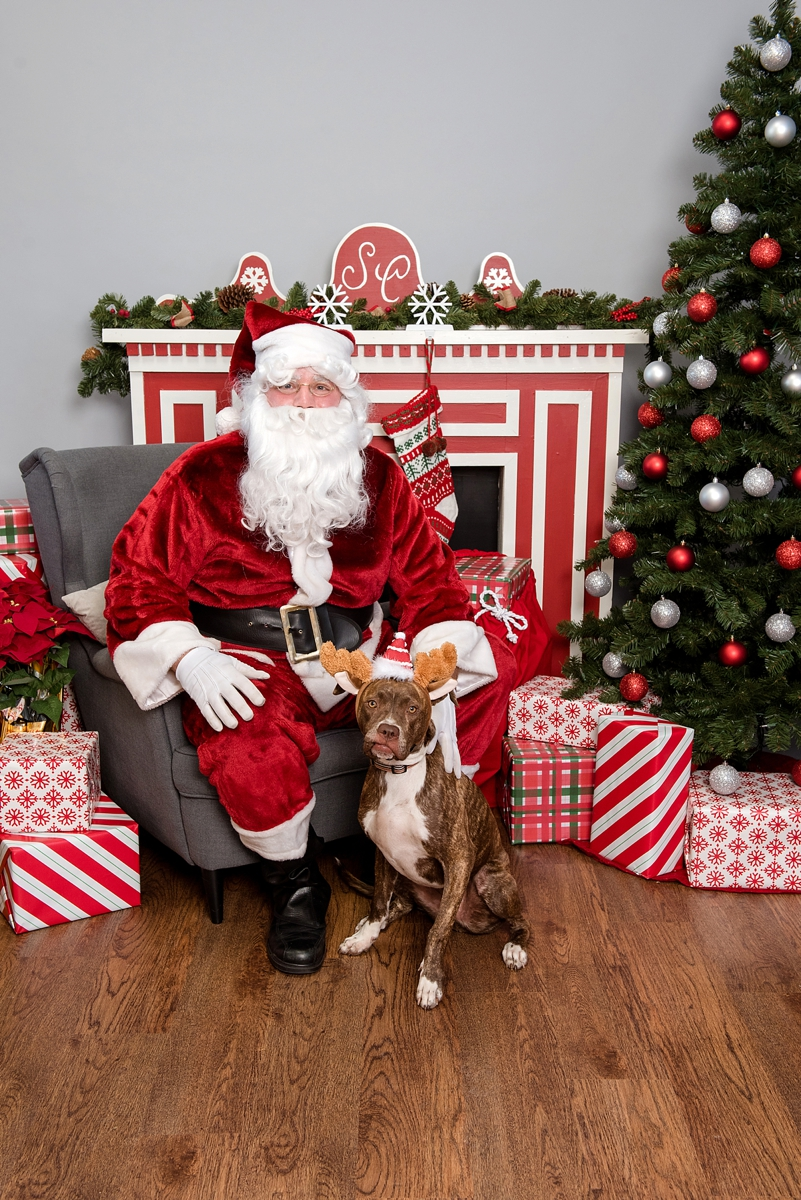 pet photos with Santa Petagogy Greensburg 006.jpg