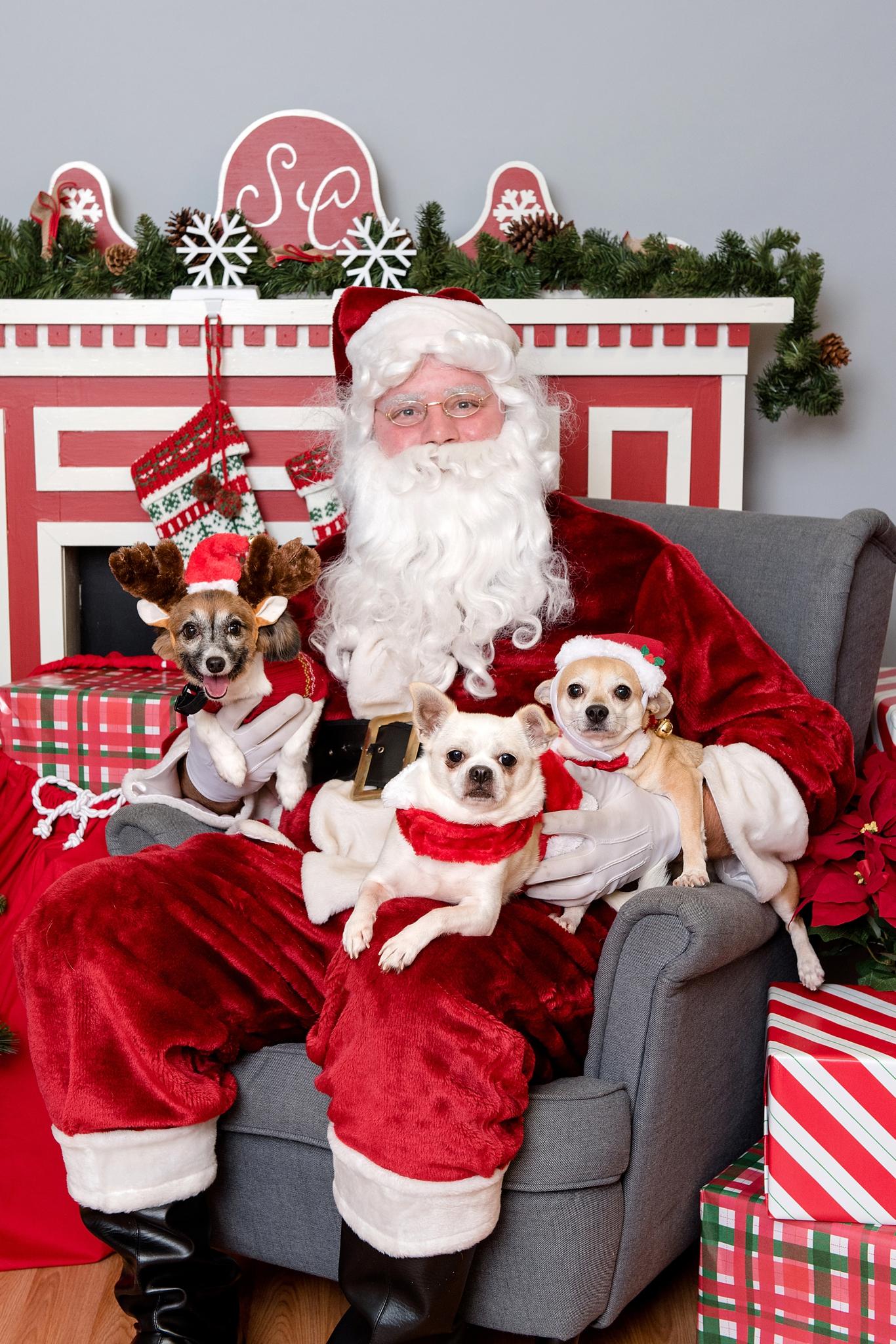 pet photos with Santa Jenny Karlsson Photography 001.jpg