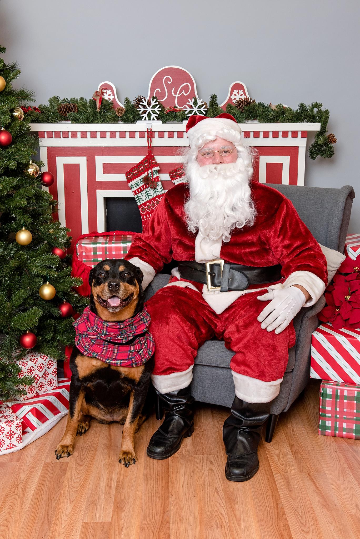 pet photos with Santa Jenny Karlsson Photography 004.jpg