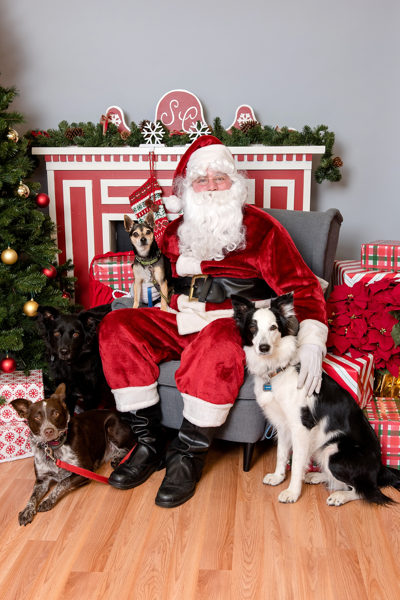 pet photos with Santa Jenny Karlsson Photography 006.jpg