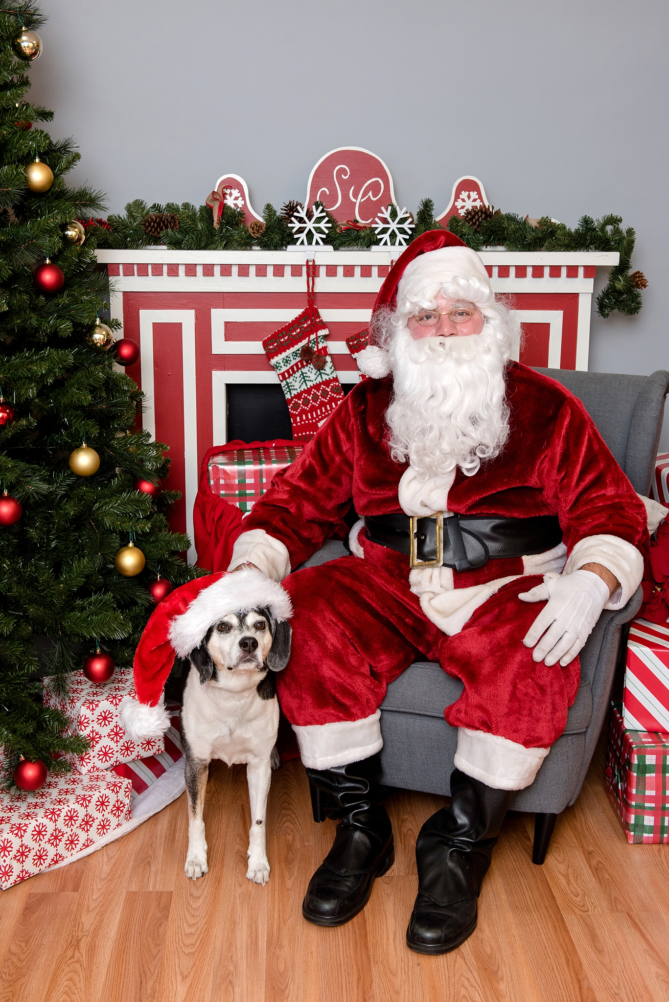 pet photos with Santa Jenny Karlsson Photography 008.jpg