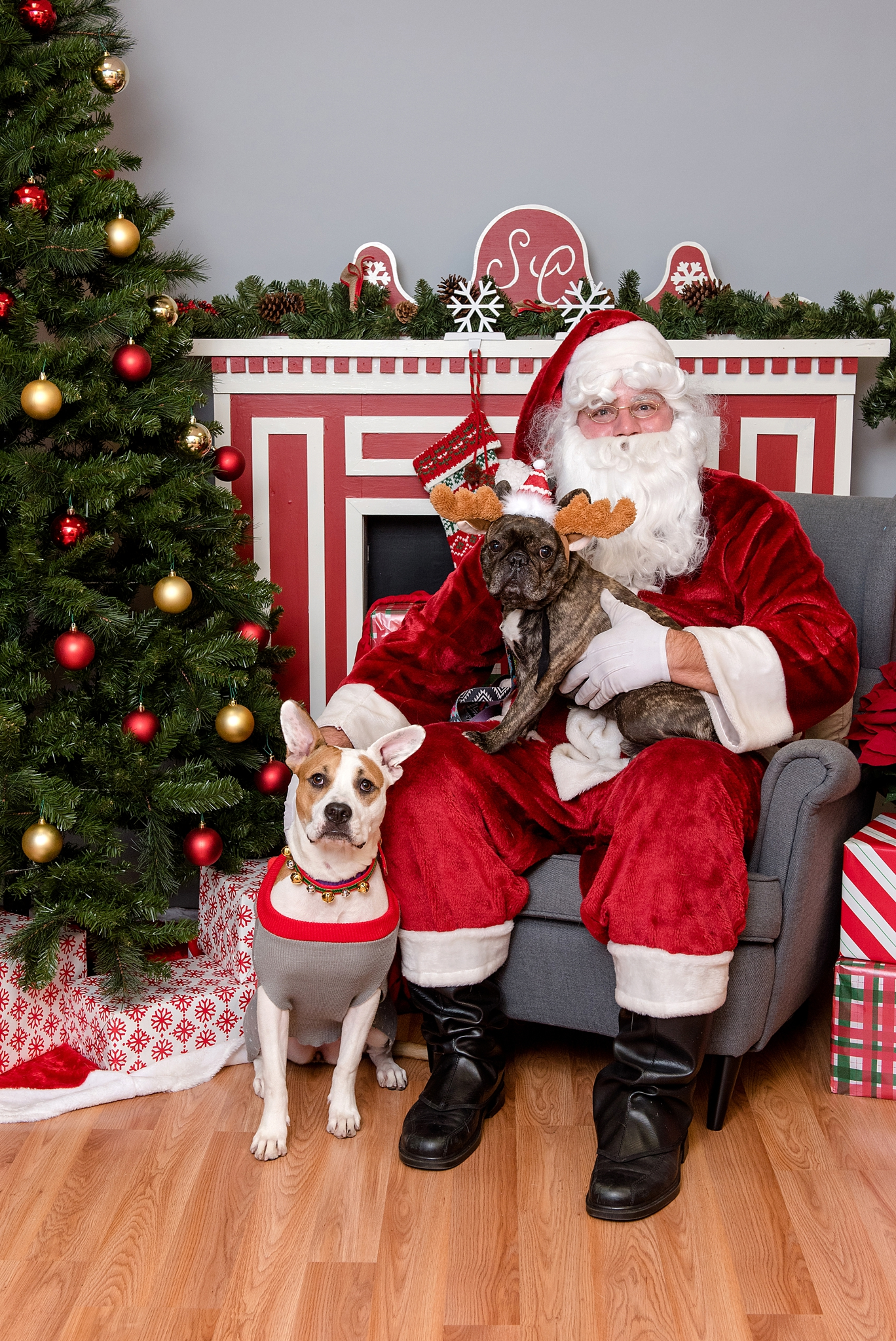 pet photos with Santa Jenny Karlsson Photography 010.jpg