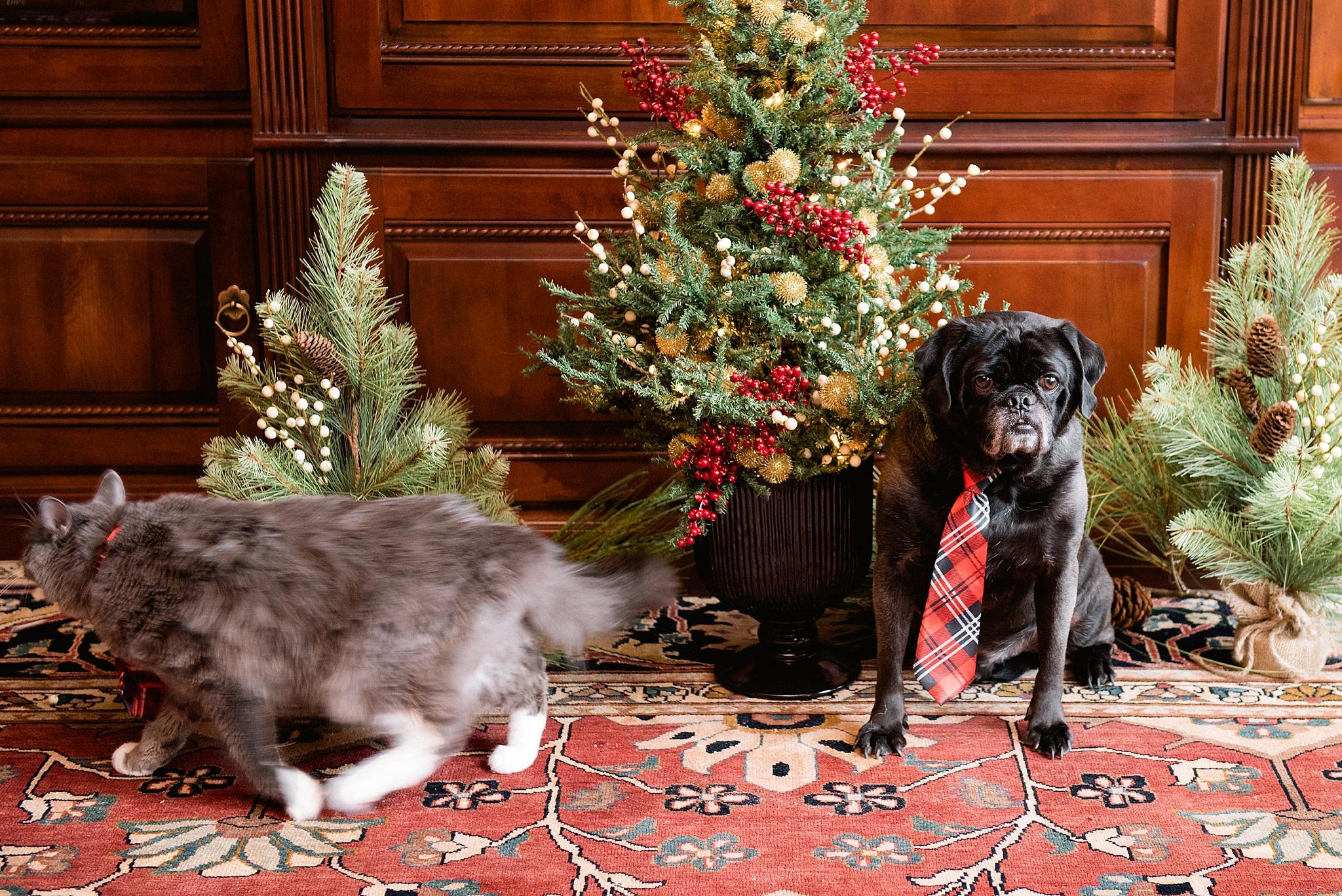 Rufus & Armani 010.jpg