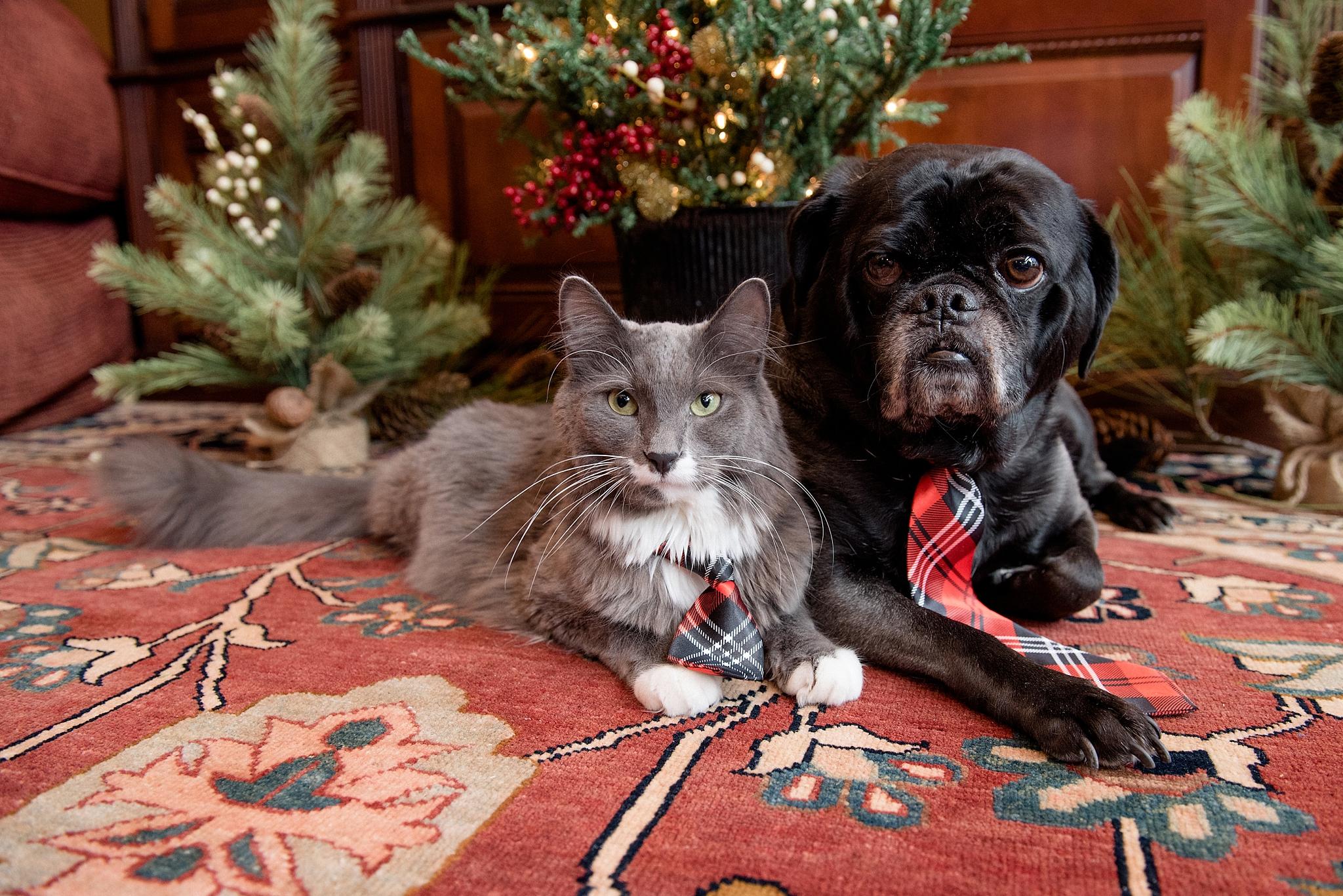 Rufus & Armani 016.jpg