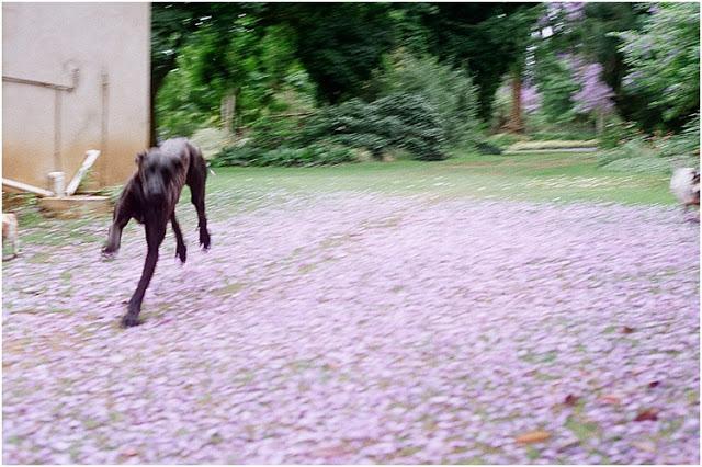 RoxyPicturesVintageFilm_0100.jpg