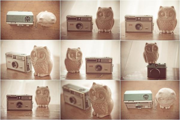 RoxyPicturesOwlCamera (5 of 6)_RoxyPictures.jpg