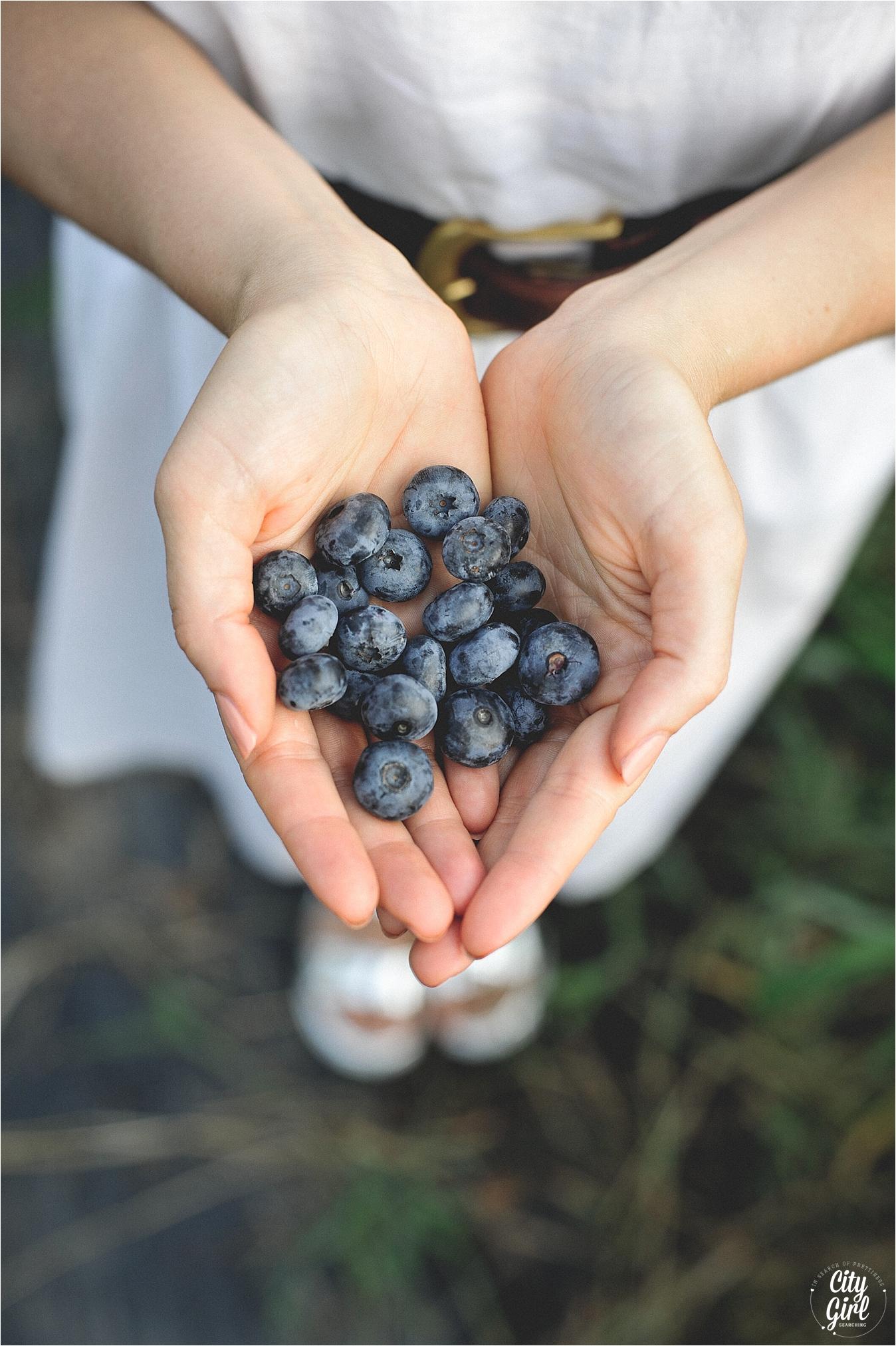 BlueberryFarmSouthKoreaHelen_0013.jpg