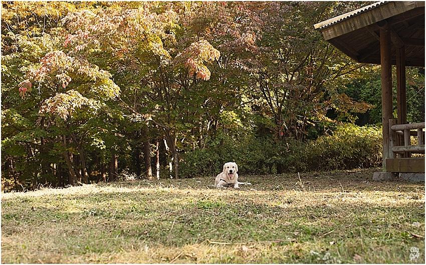 ShadowNamiPuppyinKorea_0025.jpg
