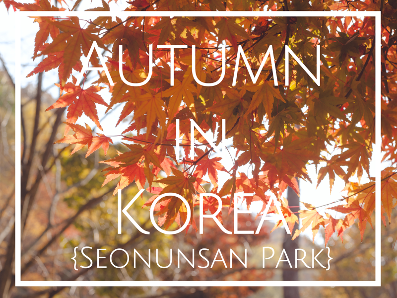 AutumnInKoreaFallLeavesSeonunsanPark