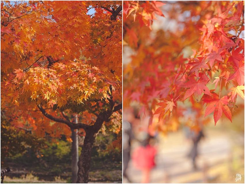 AutumnInKorea_0001.jpg