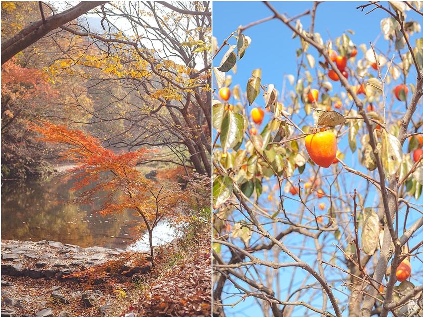 AutumnInKorea_0008.jpg