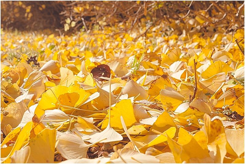SeonunsanParkSouthKorea_0003.jpg