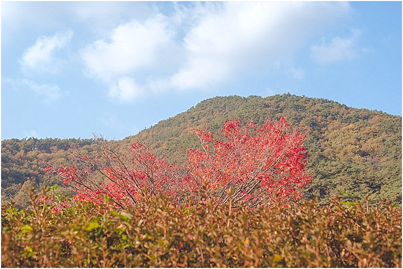 SeonunsanParkSouthKorea_0008.jpg