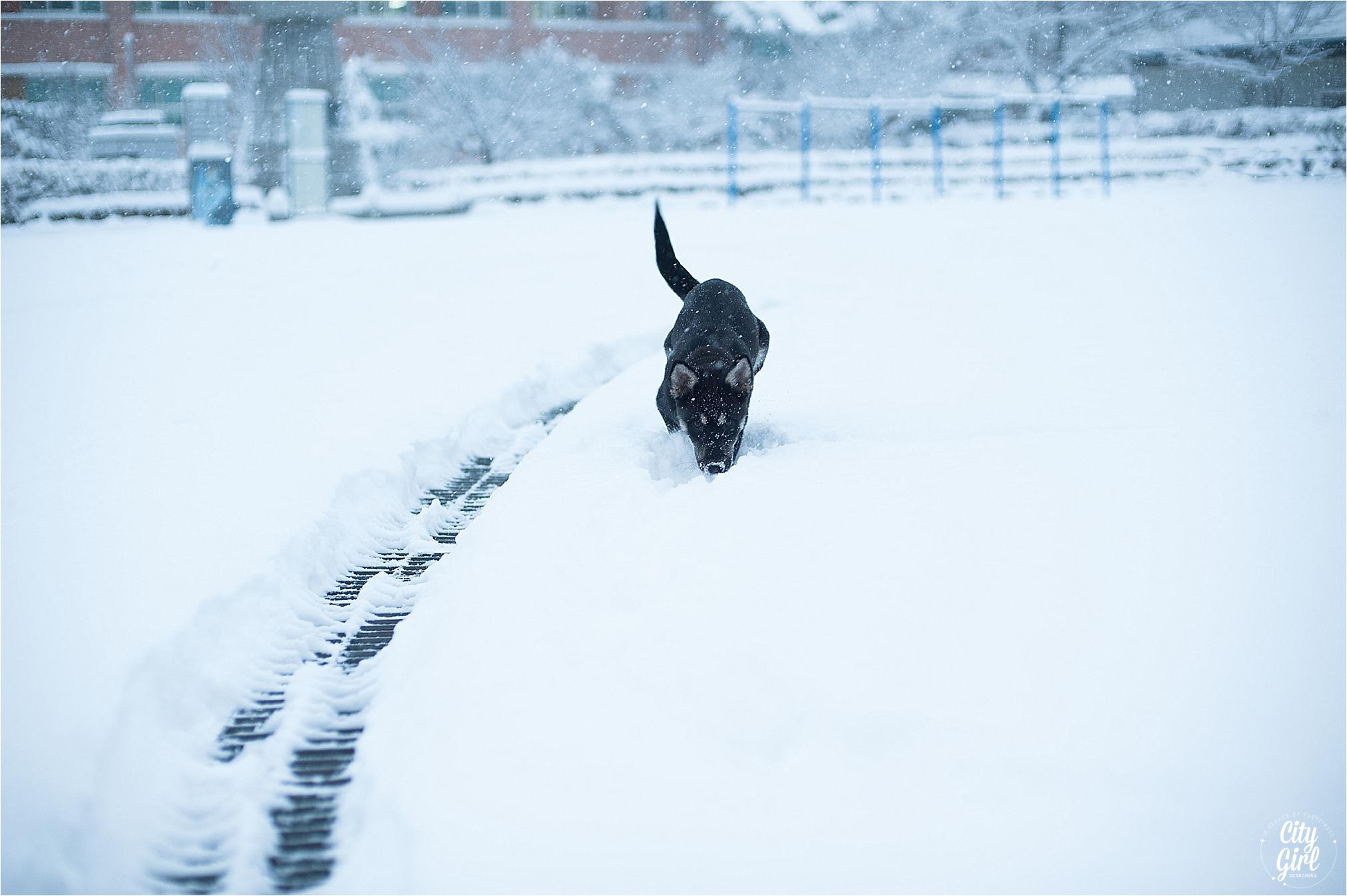 SnowInKorea_0005.jpg