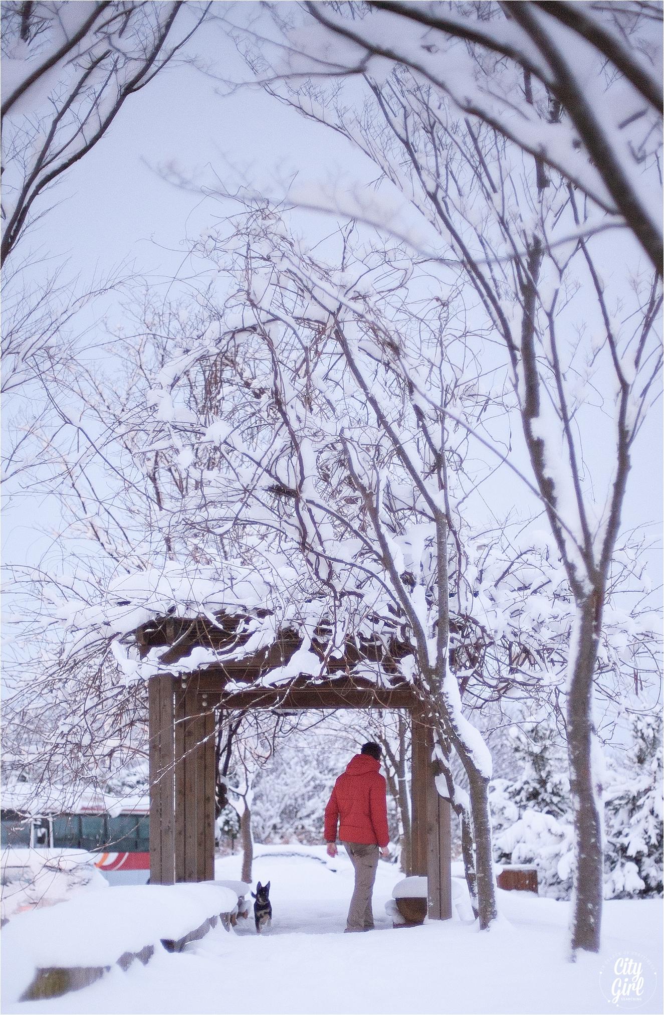 SnowInKorea_0007.jpg