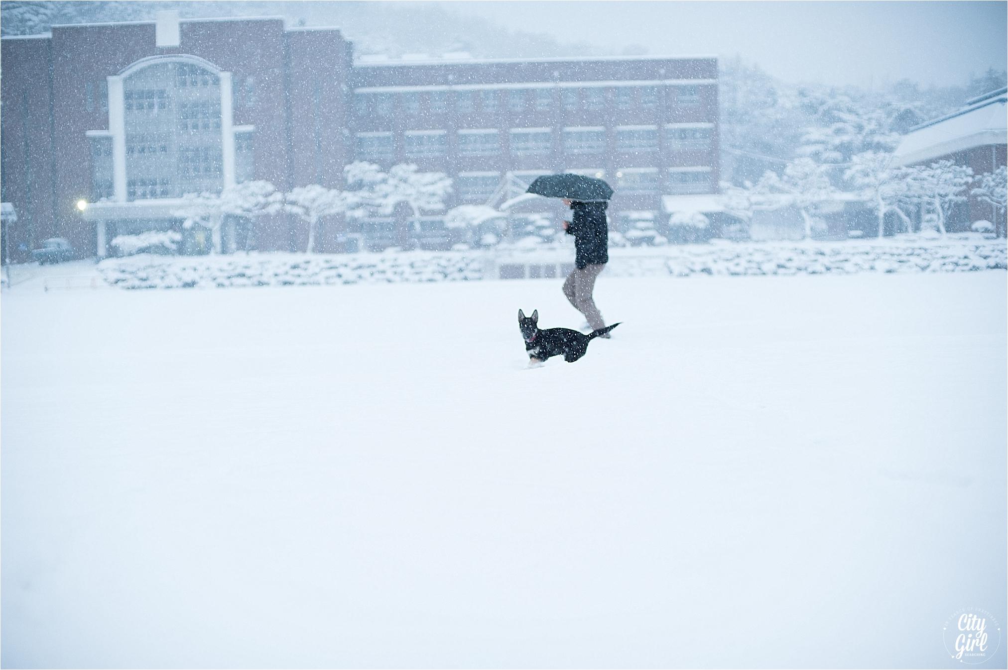 SnowInKorea_0012.jpg
