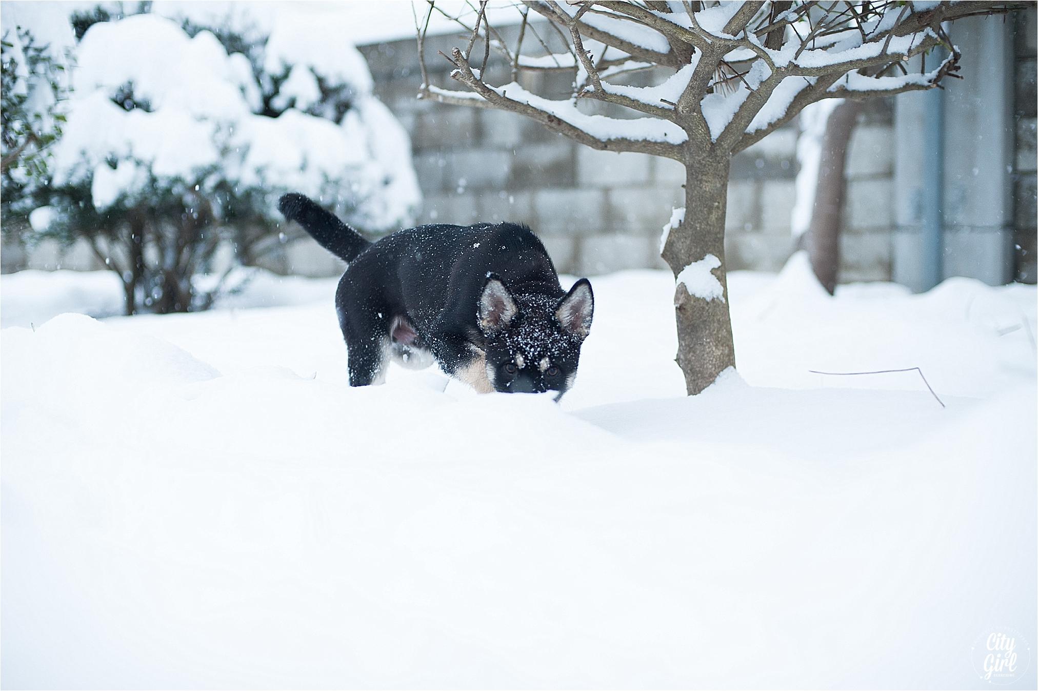 SnowInKorea_0015.jpg