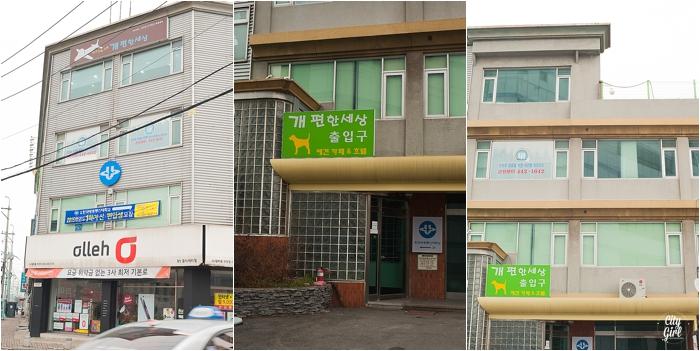 DogCAfeDogHoteGunsanSouthKorea