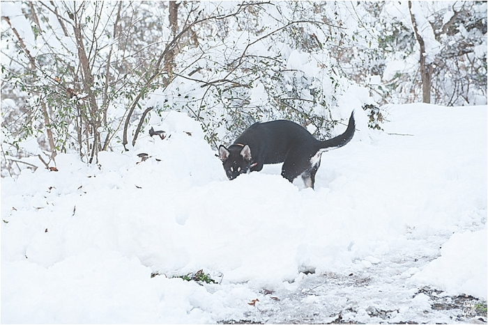 SnowInKorea_0010.jpg