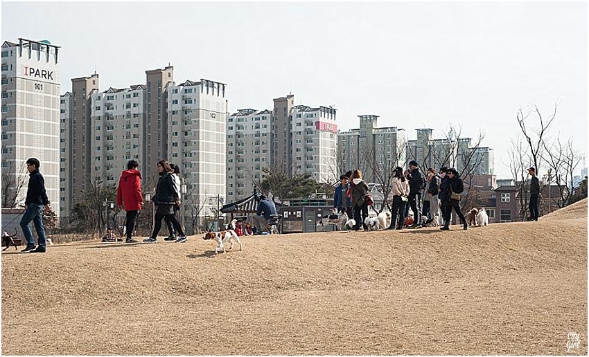 JeonjuDogParkSouthKorea_0073.jpg