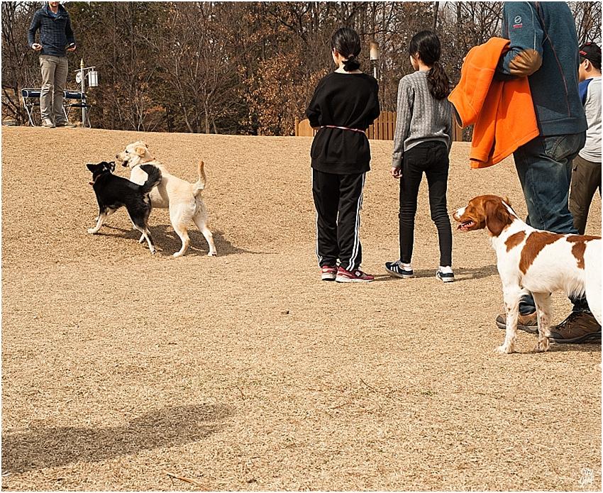 JeonjuDogParkSouthKorea_0068.jpg