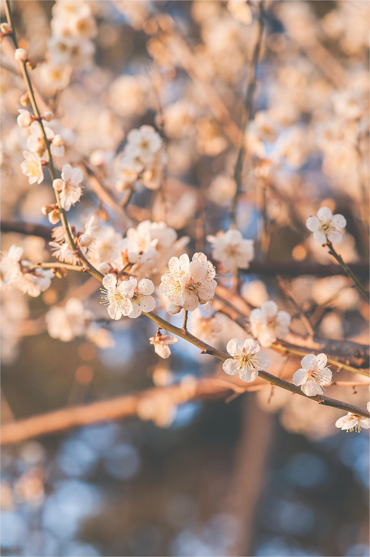 SpringBlossomsInSouthKorea_0024.jpg