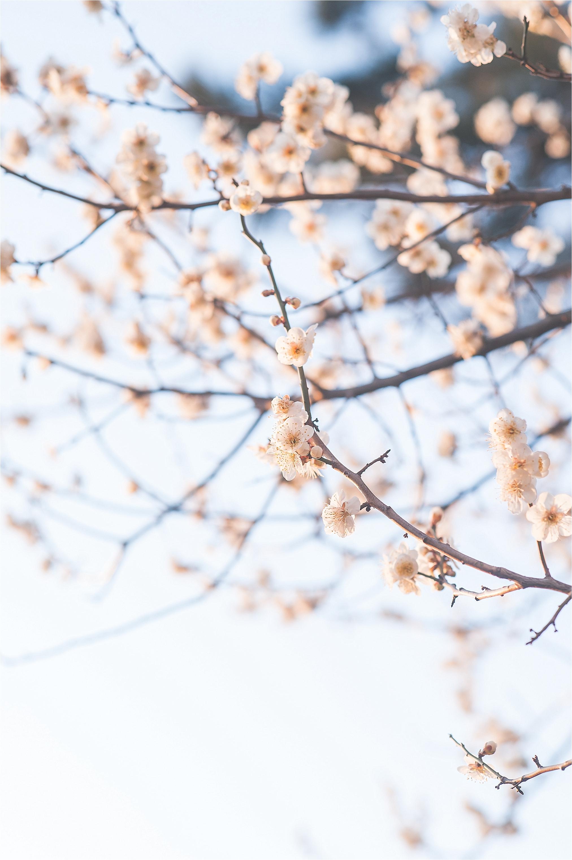 SpringBlossomsInSouthKorea_0025.jpg