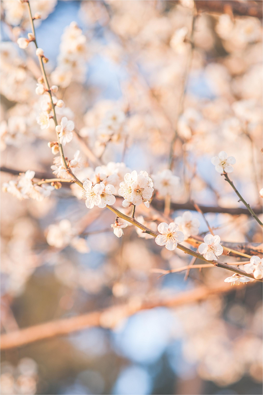SpringBlossomsInSouthKorea_0029.jpg