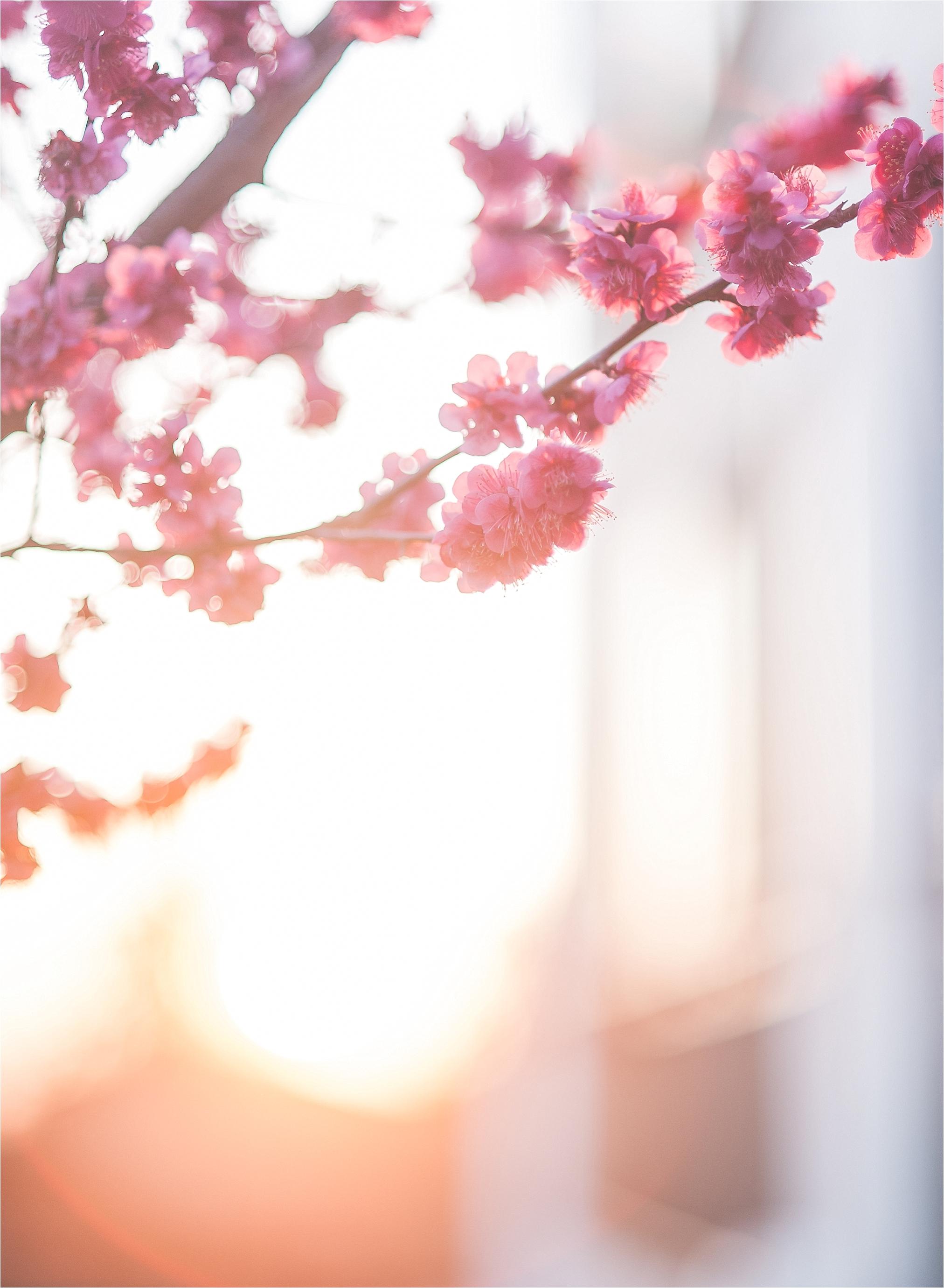 SpringBlossomsInSouthKorea_0031.jpg