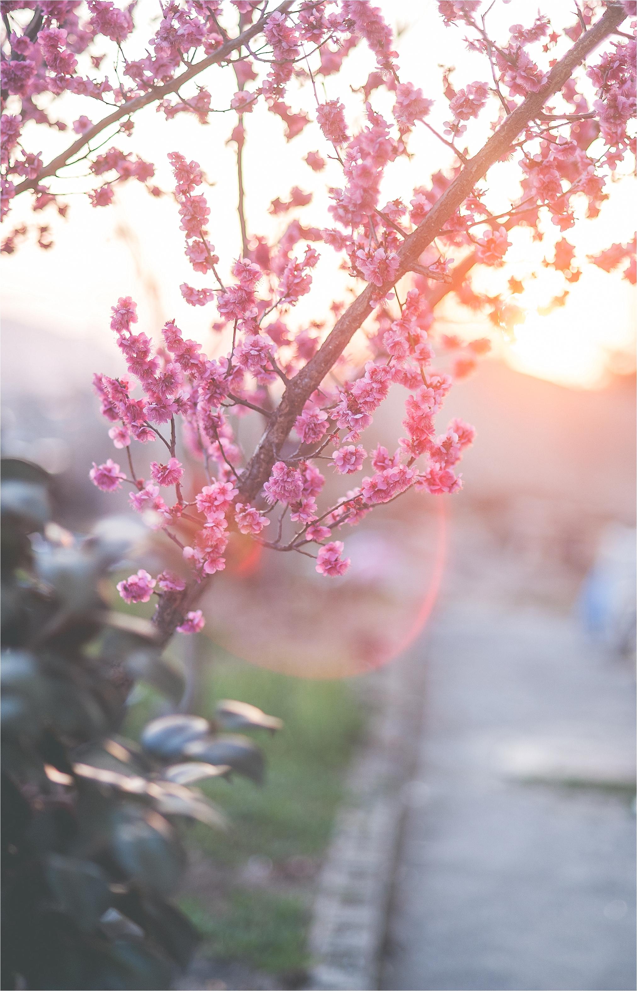 SpringBlossomsInSouthKorea_0033.jpg