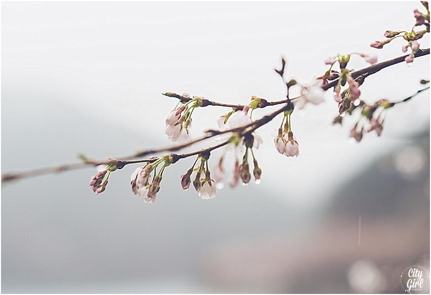 CherryBlossomsinSouthKorea_0069.jpg