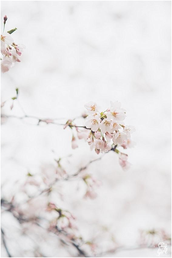 CherryBlossomsinSouthKorea_0070.jpg