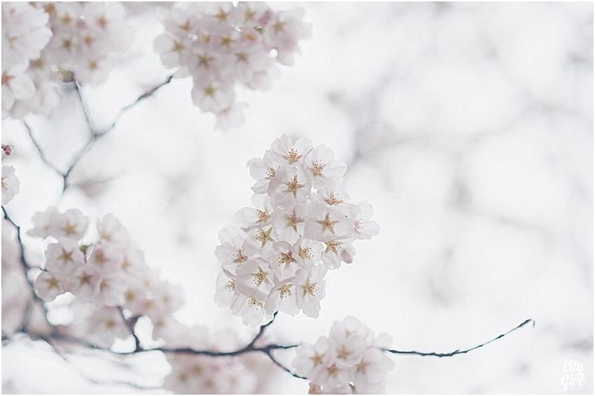 CherryBlossomsinSouthKorea_0075.jpg