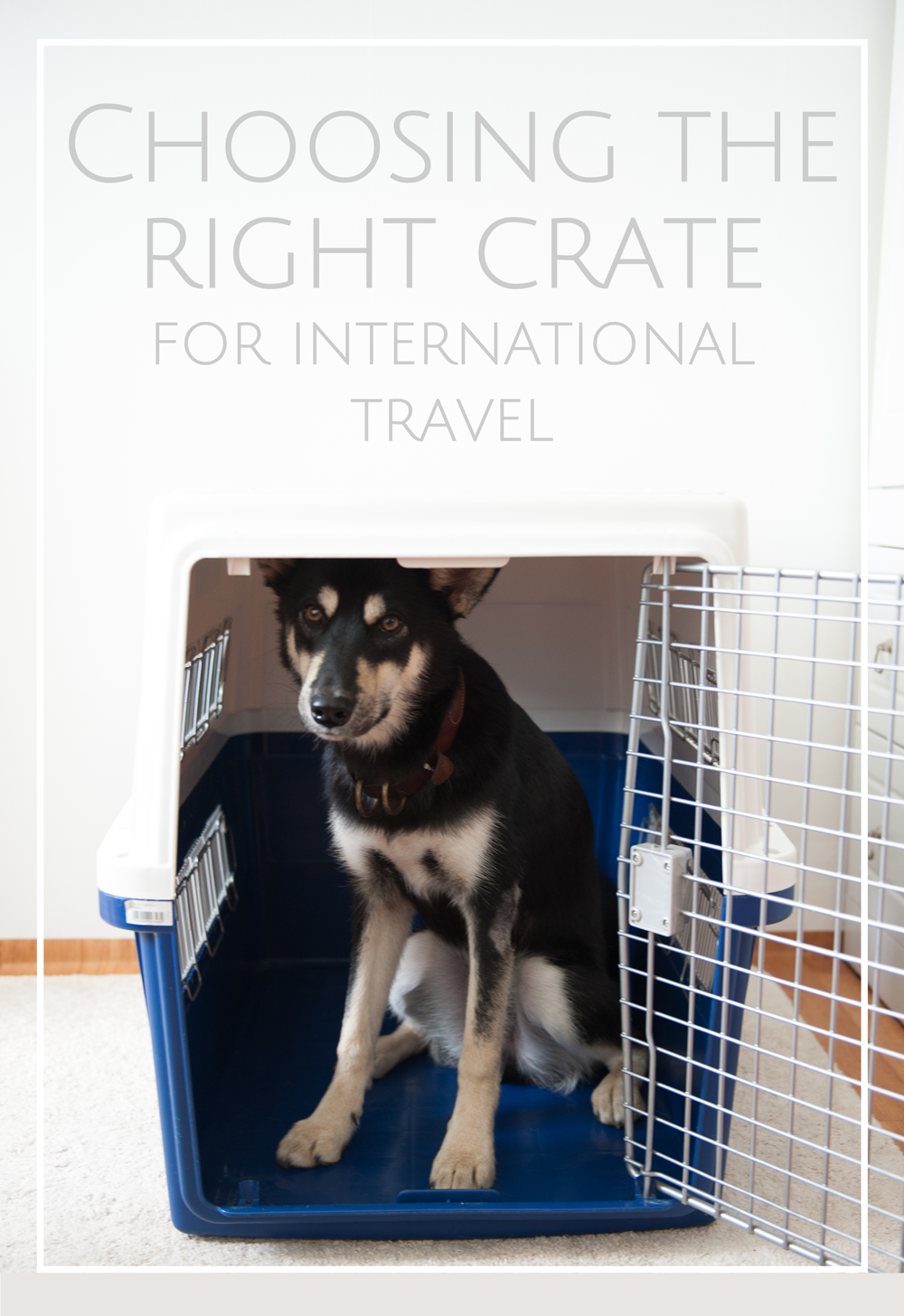 How To Choose IATA Approved Crate for International Travel
