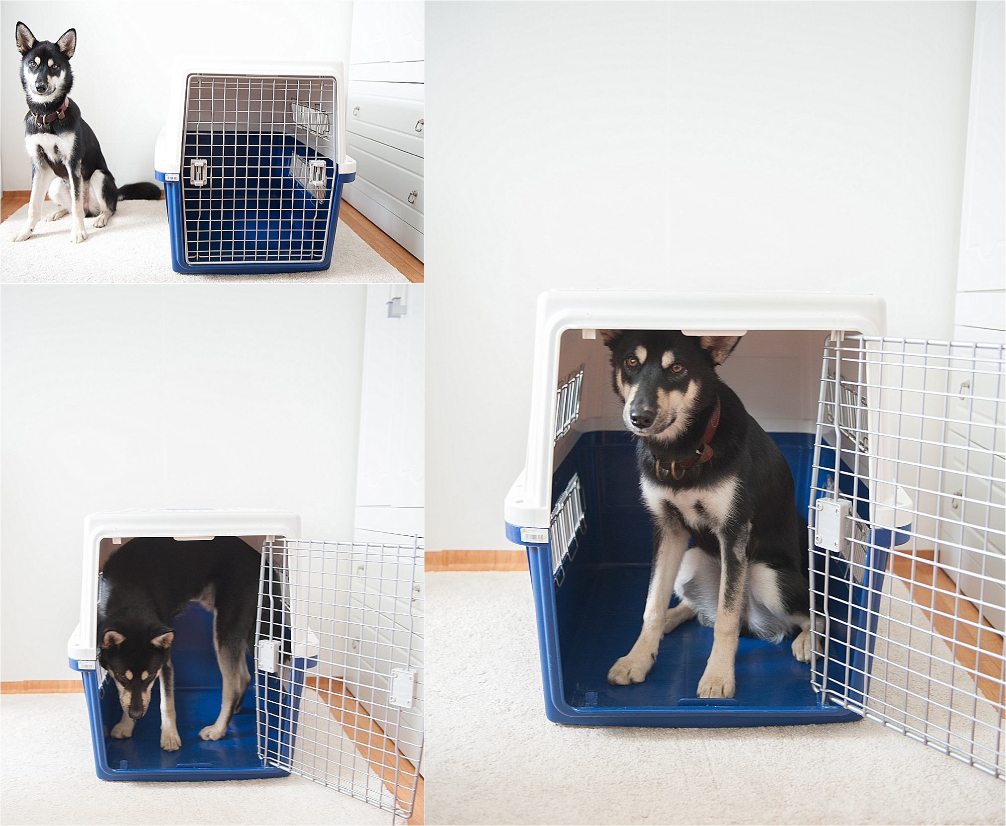 Airline Approved IATA Dog Crate