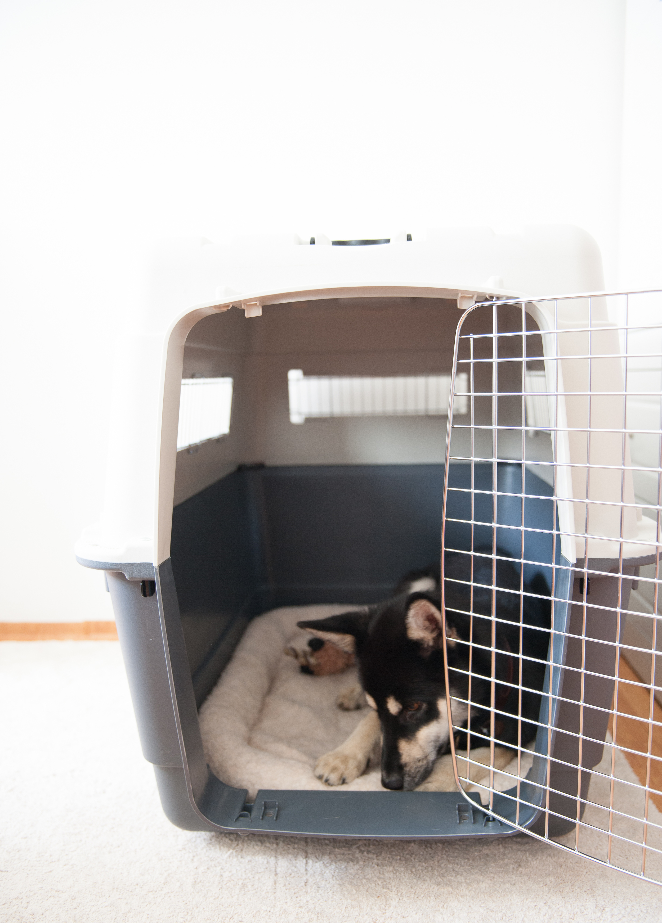 IATA Airline Approved Dog Crate