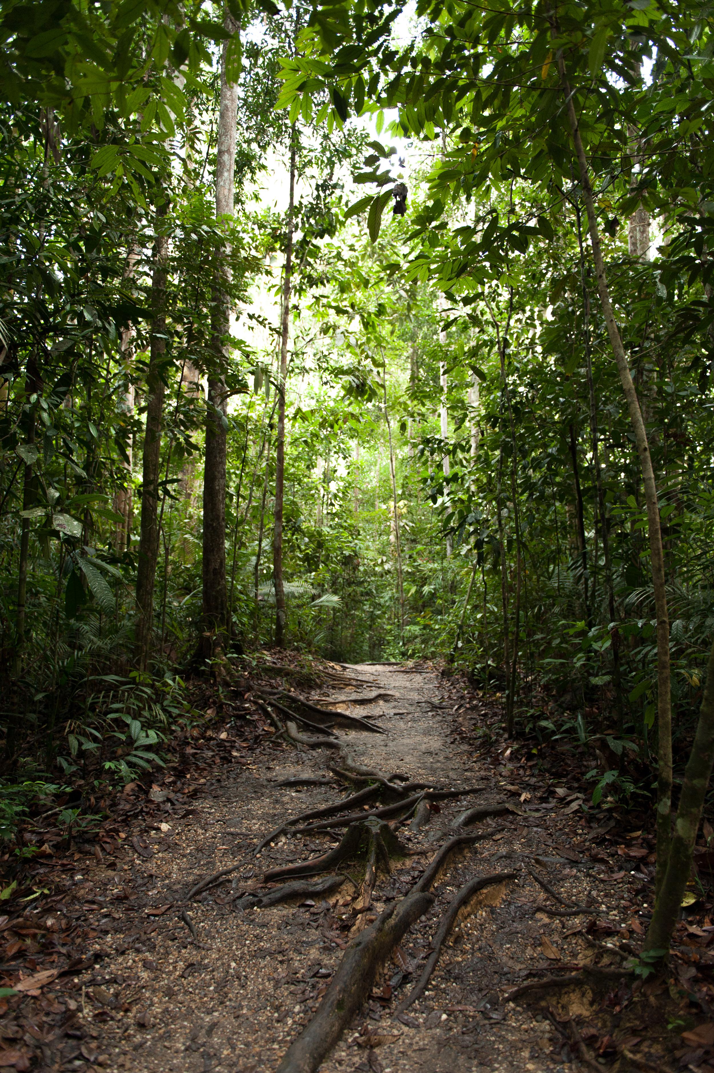 BorneoMalaysiaAugust2015 (30 of 166).jpg