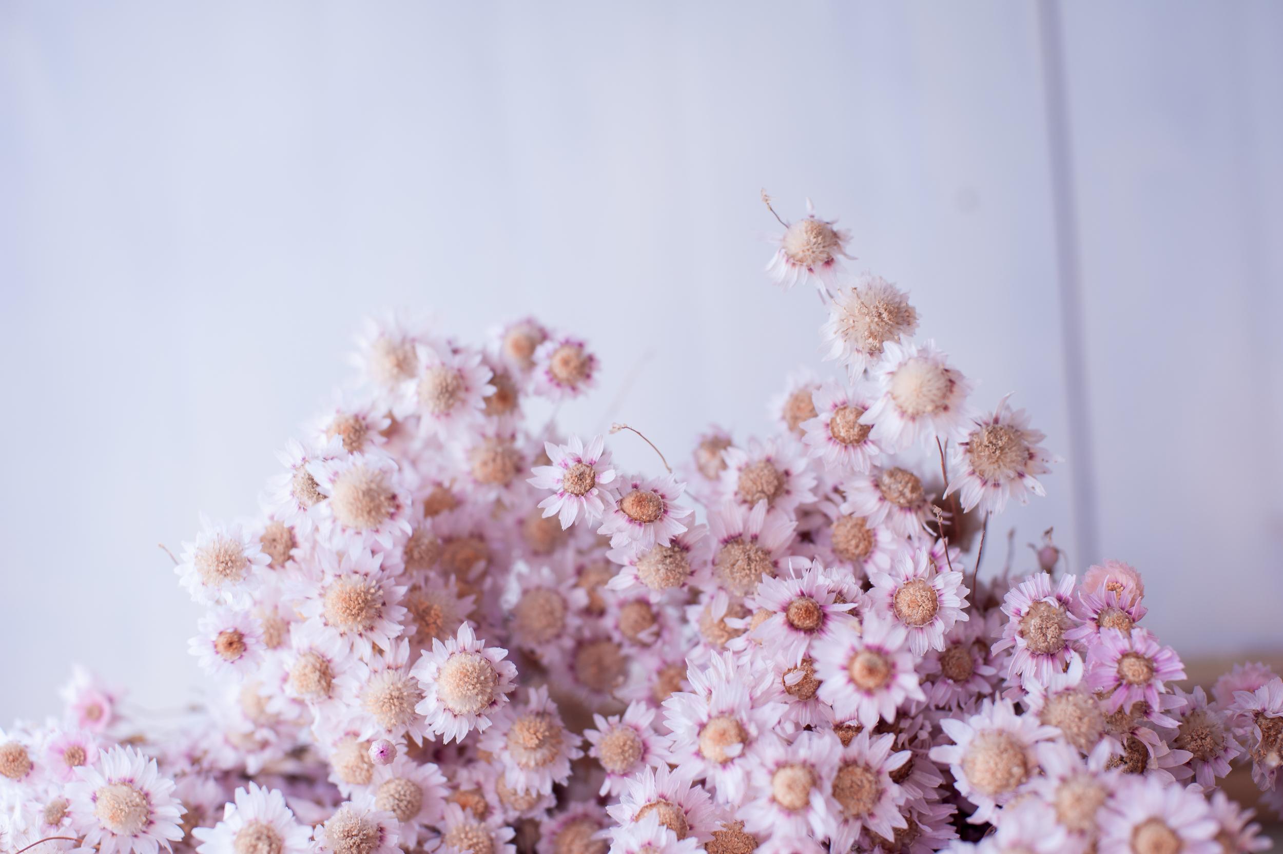 Pink Flowers in Korea