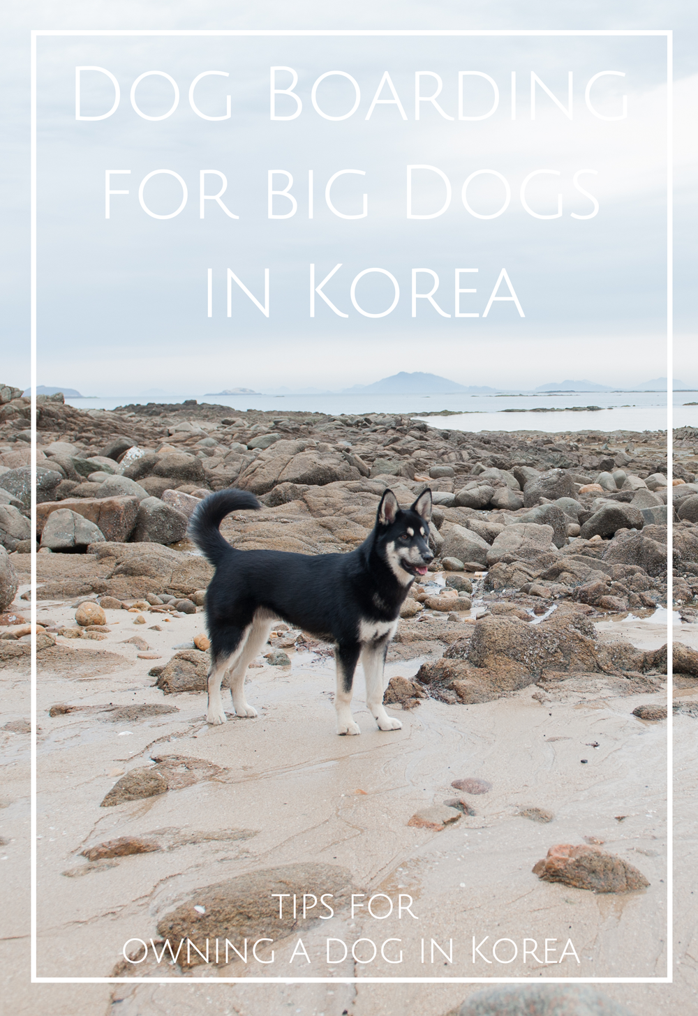Dog Boarding for Big Dog Korea 4MenDogs Daejeon