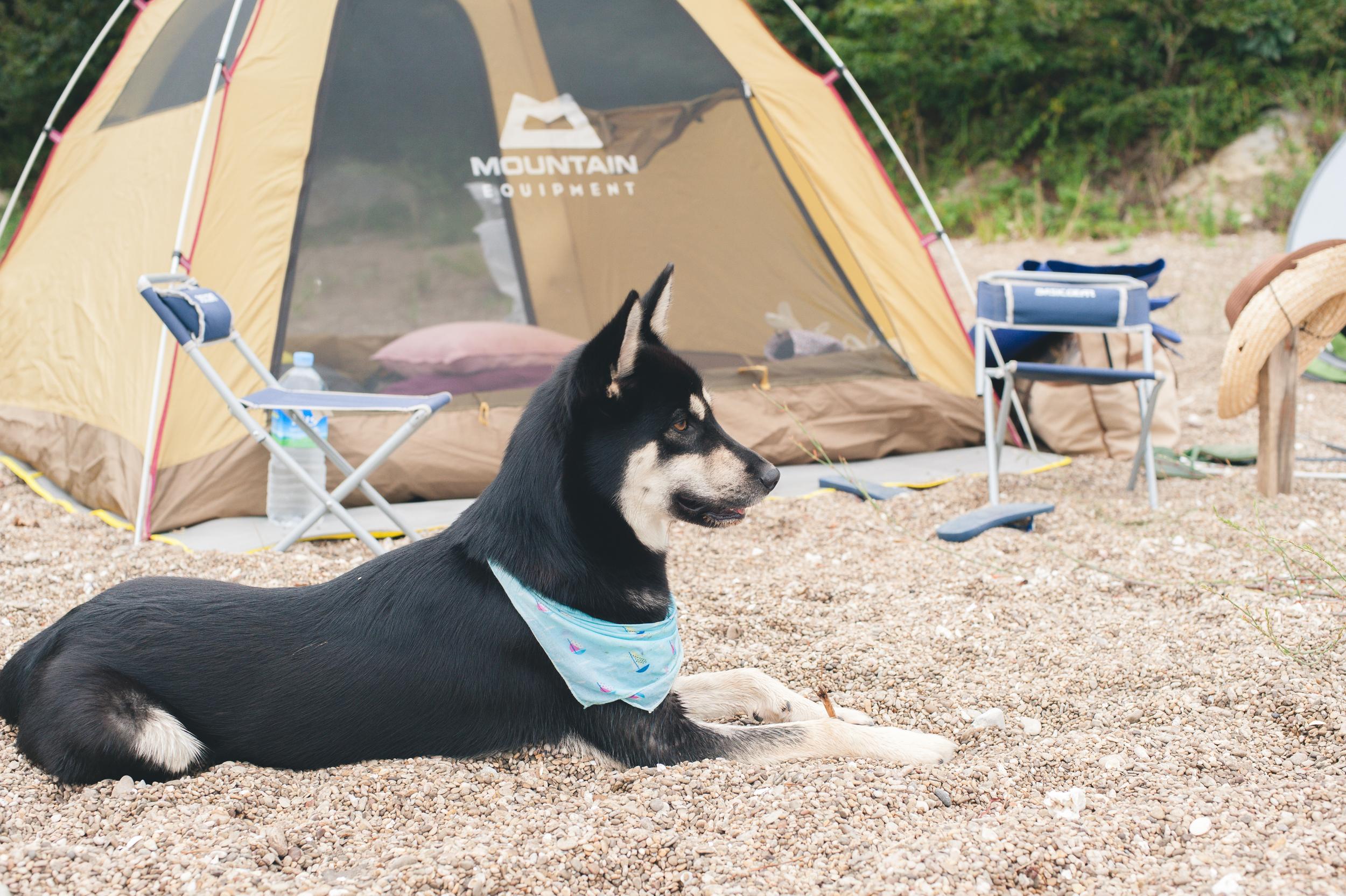 Island Camping In Korea Wido Island (13 of 99).jpg
