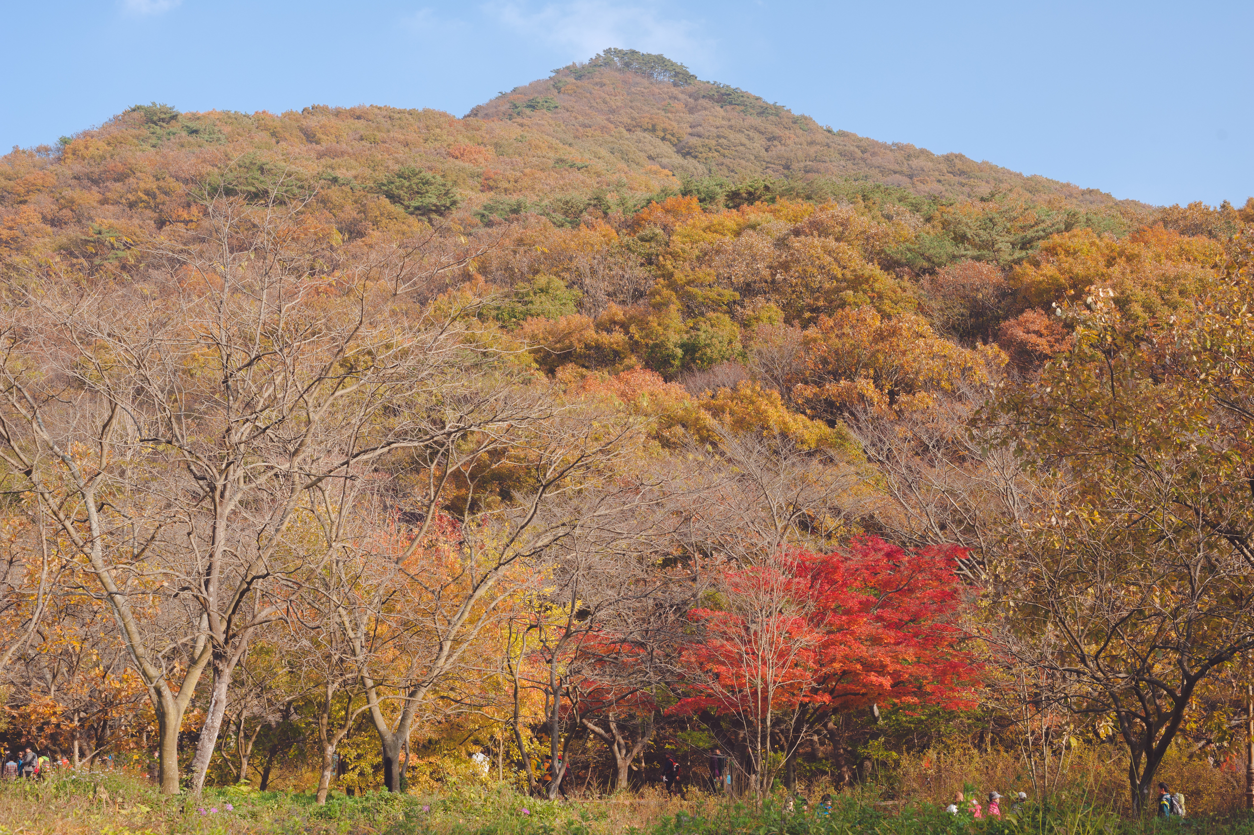 AutumnInKoreaSoenunsaParkFallLeaves (29 of 37).jpg