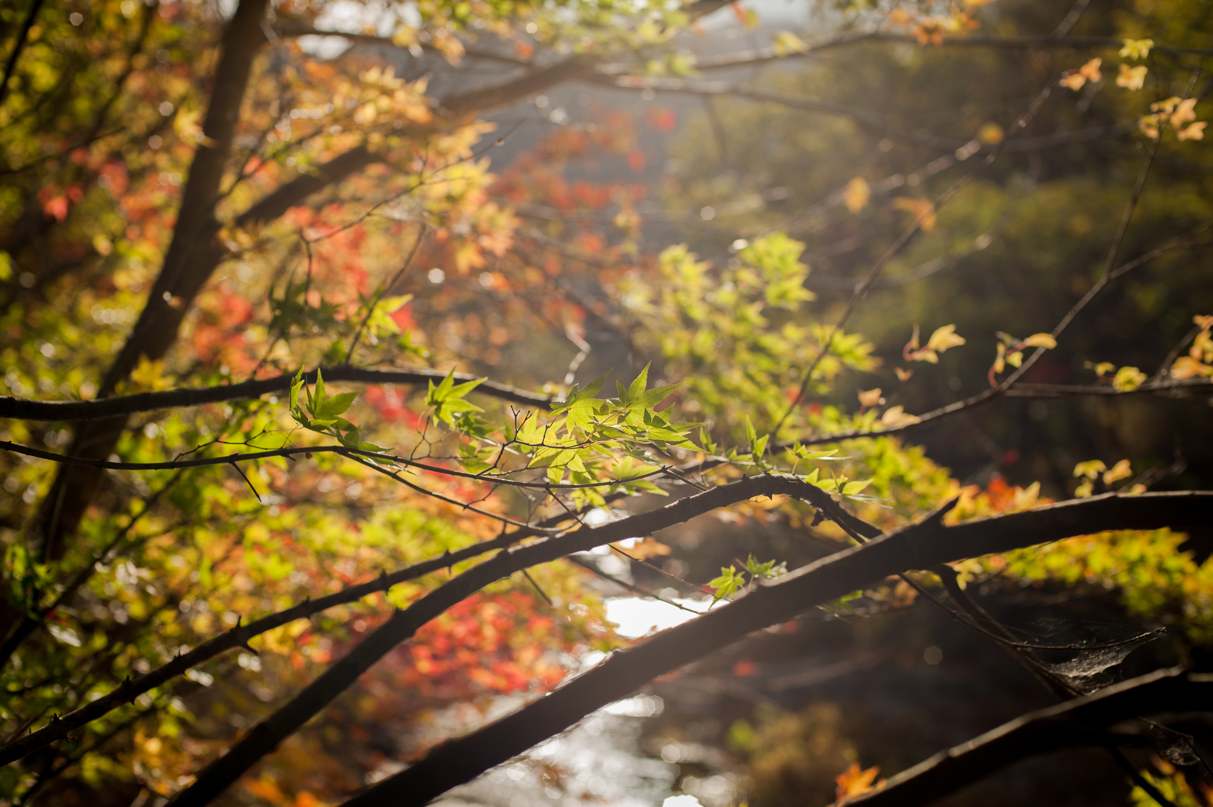 Naejangsan Autumn Fall Leaves Colours South Korea CityGirlSearching Photography (5 of 72).jpg