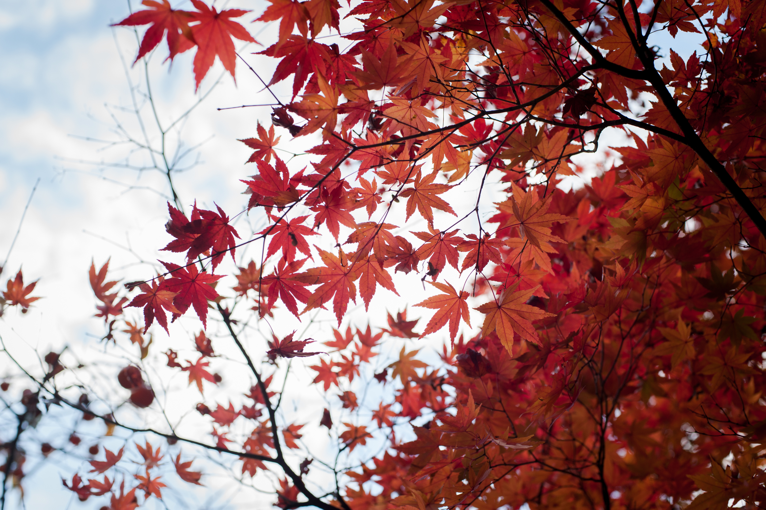 Naejangsan Autumn Fall Leaves Colours South Korea CityGirlSearching Photography (8 of 72).jpg