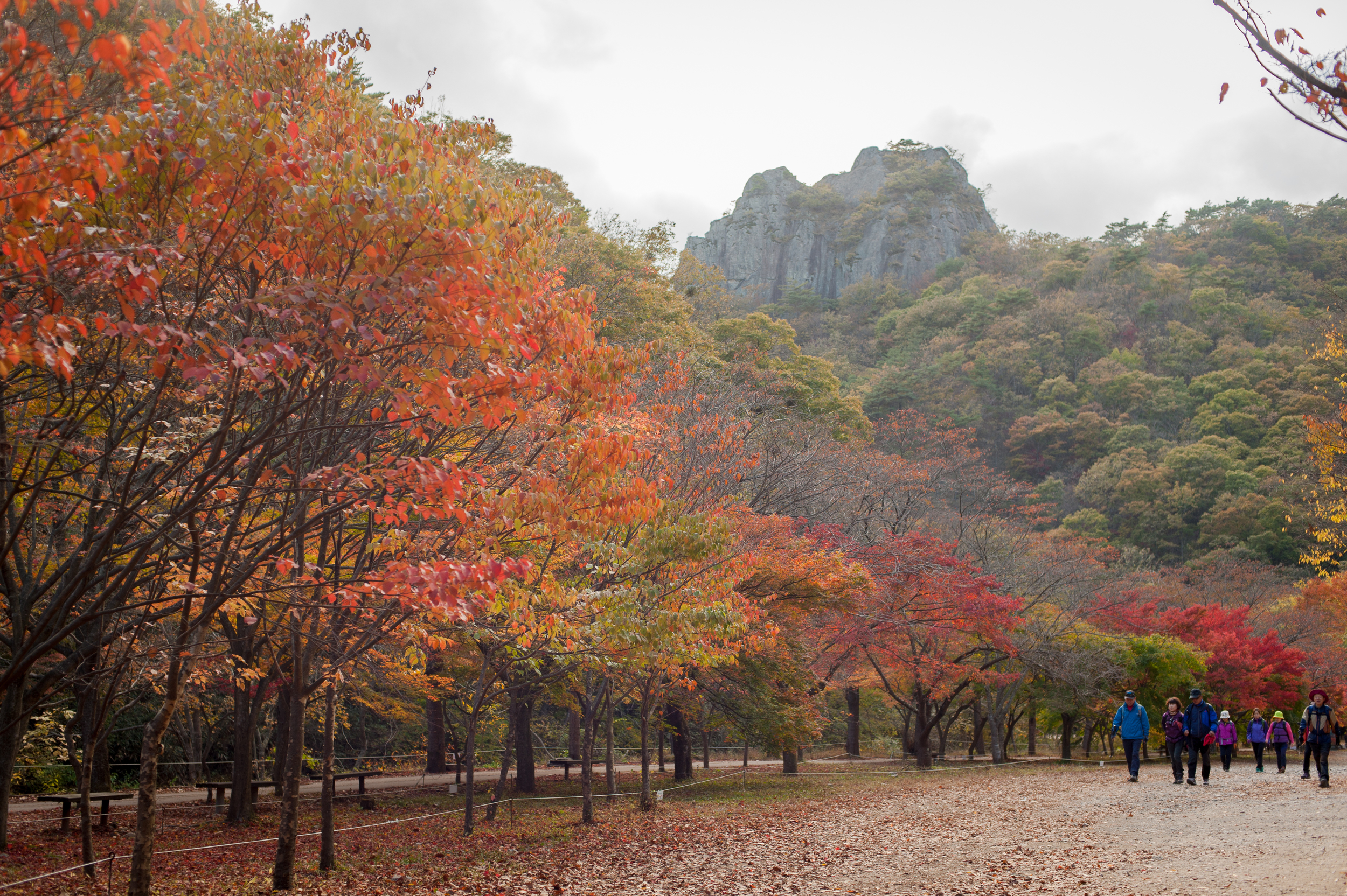 Naejangsan Autumn Fall Leaves Colours South Korea CityGirlSearching Photography (10 of 72).jpg